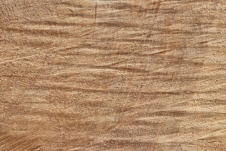 Tree trunk slice background. wood stump background texture. Texture for design. Copy space. deforestation.
