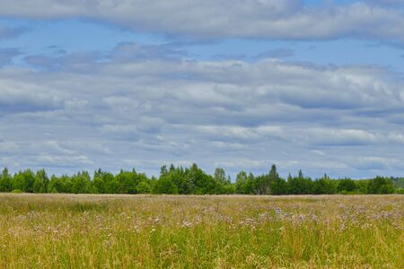 Russian nature. field overlooking the forest. landscape of russian Reklamní fotografie