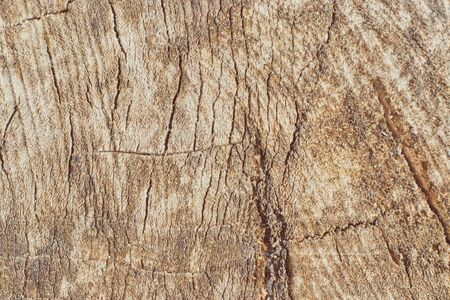 slice from a fir treeTree trunk slice background. wood stump background texture. Texture for design. Copy space.
