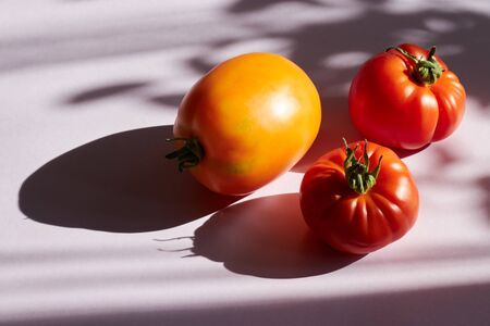 Ripe raw organic tomato on the background. Hard light, sharp shadows. Additional color palette. Balanced diet vegan healthy lifestyle concept. Creative food poster. plant minimalism.