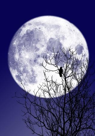 corvo imperiale: Luna illustrazione completa Archivio Fotografico