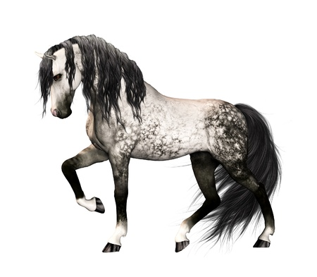 dapple horse: Isolated illustration of a horse