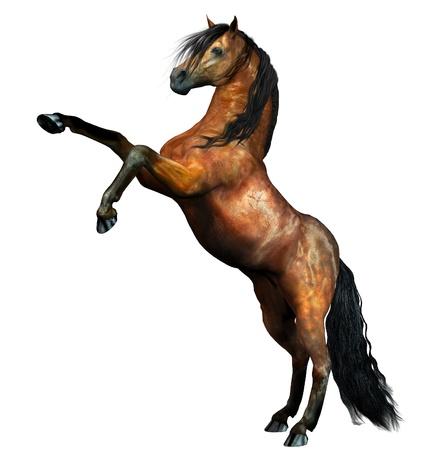 mustang horse: Brown wild horse