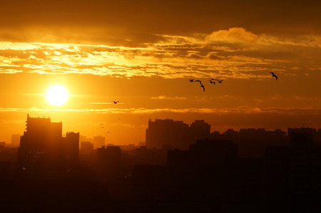 peaking: Sunrise over the city, birds fly away Stock Photo