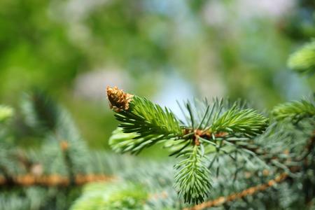 dissolved: Giovane albero ramoscello disciolto, messa a fuoco selettiva sul ramo, verde