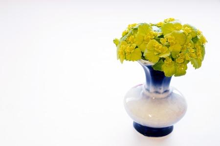 fondo para bebe: Un peque�o jarr�n lleno de flores verdes en el fondo blanco, copia-espacio Foto de archivo