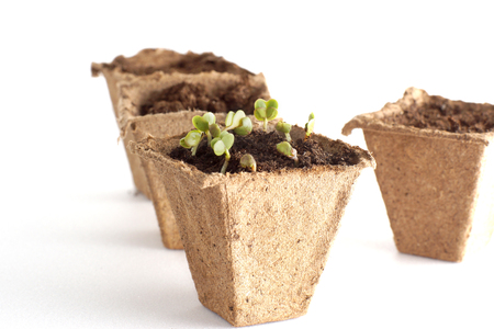 Spring seedlings for his small garden. White background. Four peat pots for seedling with earth.