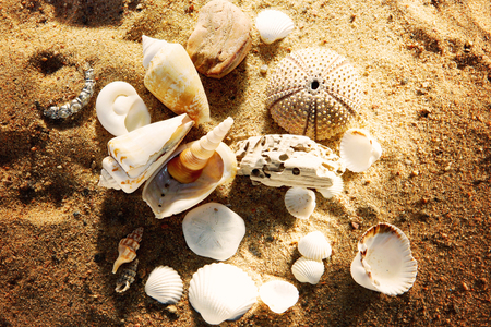 interspersed: Shells lie on the sand on the beach interspersed with stones, an engagement ring in the sand - a gift and a surprise. Stock Photo