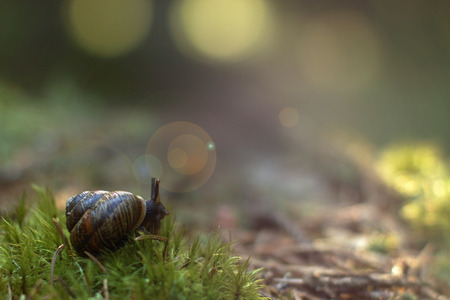 slithery: The garden snail woke up in the forest on soft moss, gets out of the sink and looks around.