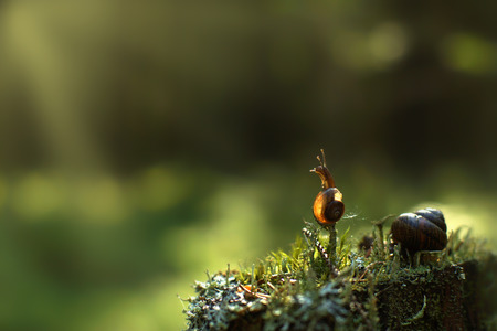 slithery: A small snail climbed a vertical twig in the forest and looks out of the way, is illuminated by the suns rays, copy space for text.