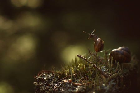 A small snail climbed a vertical twig in a dark forest and looks away.