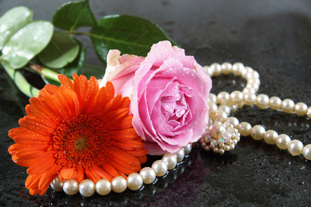 A pink rose and an orangery gerbera lie on a dark granite surface in the rain, alongside pearl beads and an earring. Stock Photo