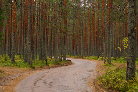A winding dirt road past a pine forest, the autumn season. Stock Photo