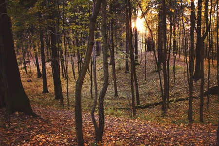 A beautiful hollow in a deciduous forest lit by the autumn sun.
