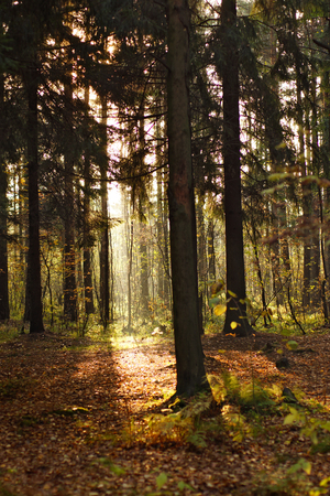 inversion: A bright band of sunlight in the depths of deciduous forest.