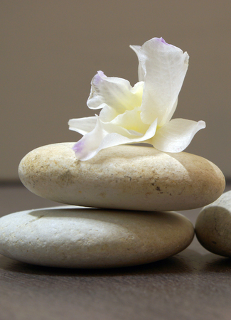 A white flower lies on a pile of smooth stones.