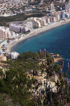The lavender bush on Mount Ifach, the blue sea and the coastal town of Kalp on the Mediterranean coast in Spain, the Costa Blanca region.