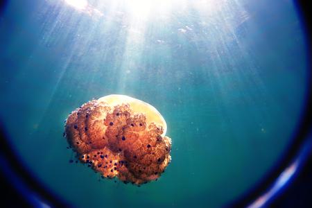 クラゲは海に浮かび、太陽の光は青い水を貫通し、レンズを通して見る。 写真素材