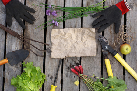 Layout on the garden theme. Garden tools and harvested crops are spread around a sheet of crumpled paper. Copy space for your text.