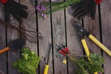 Garden tools and various vegetables are spread on the boards. Stock fotó