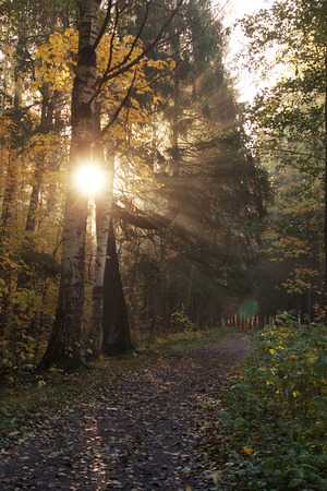Walking path in the autumn forest in the morning, the rays of the sun penetrate through the trees. Stock Photo