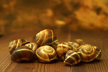 Empty shells from edible snails lie on the board on a brown background. Stock fotó
