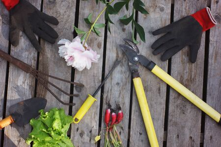 Garden tools such as secateurs, rakes, shovels and gloves on a wooden background next to the crop from the garden.