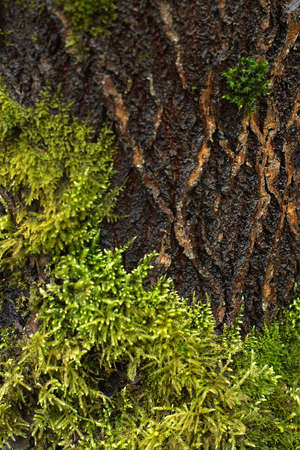 Tree bark and green moss growing on it Imagens