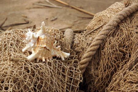The shell is entangled in a fishing net on the seashore.