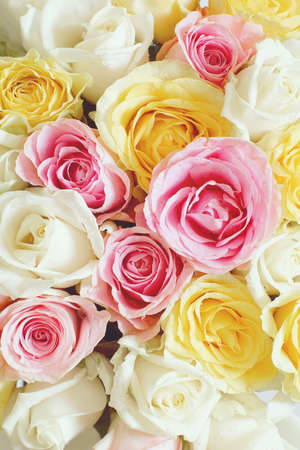 Vertical background with beautiful roses of different colors Stockfoto