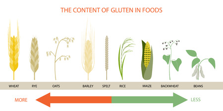 Infographics on the levels of gluten in foods. Illustration