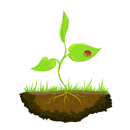 growing shoots out of the ground. vector illustration