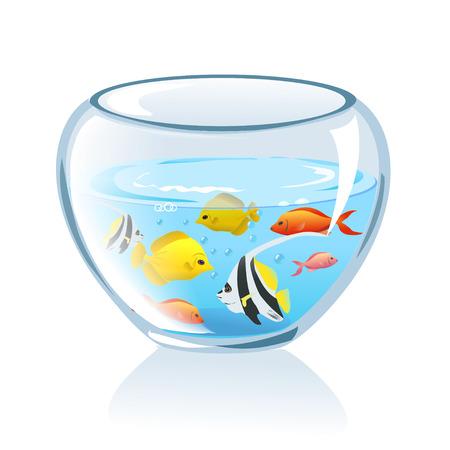 aquarium with fish isolated.