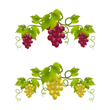 grape vine monogram.   Vector