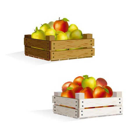 two boxes of apples.  Vector