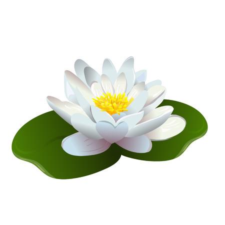 lirio acuatico: flor de loto aislado Vectores