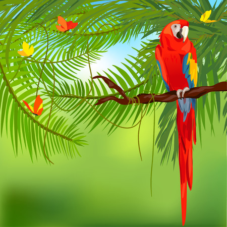rainforest: rainforest and parrot. Illustration