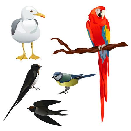 parrot flying: set of different birds.