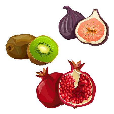 pomegranate juice: set with various fruit illustration