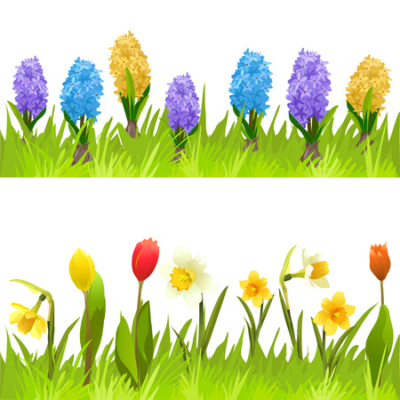 tulips isolated on white background: banners with spring flowers, tulips, daffodils and hyacinths. vector illustration
