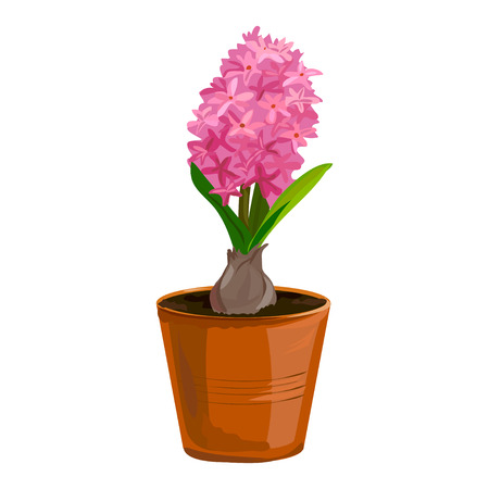 clay pot: hyacinth flower in a clay pot. vector illustration