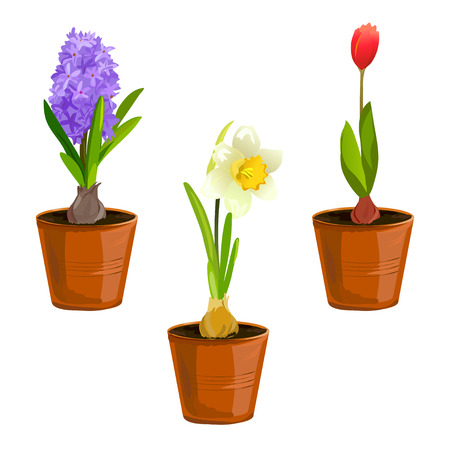 spring flowers in pots. vector illustration