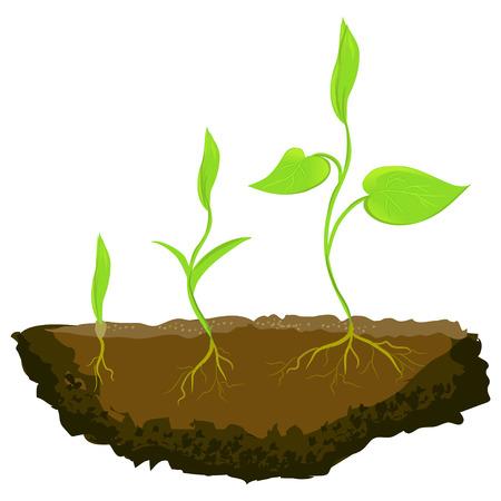 raices de plantas: tres plantas que crecen en el suelo. ilustración vectorial