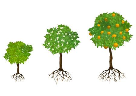 arboles frutales: el cultivo de árboles con raíces. ilustración vectorial