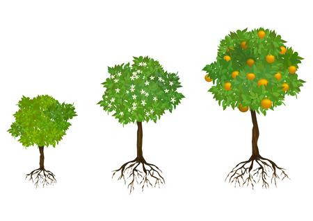 owocowy: rosnące drzewa z korzeniami. ilustracji wektorowych