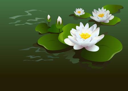 蓮の花の背景。ベクトル図