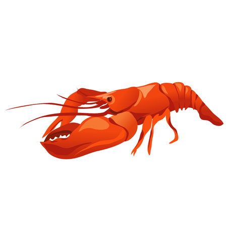 lobster isolated: lobster isolated illustration. vector