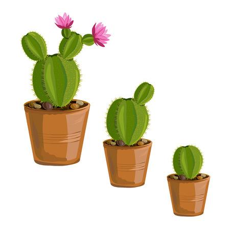 die Wachstums Kaktus Pflanzen in Töpfen. Vektor-Illustration