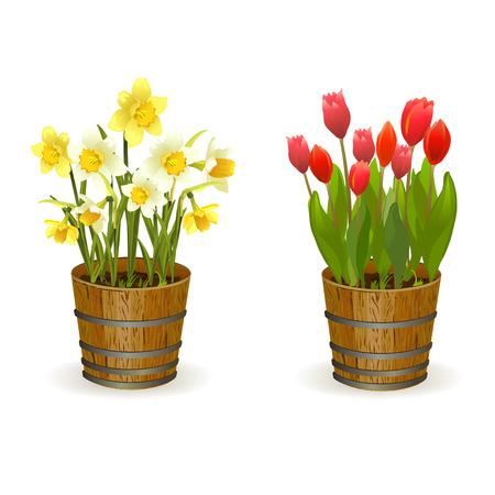 flor caricatura: Primavera flores narcisos y tulipanes. ilustración vectorial Vectores