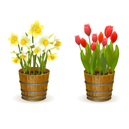 Spring flowers daffodils and tulips. vector illustration Çizim